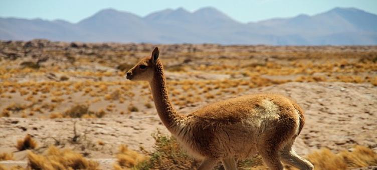 Main image ofDe la ville au désert - Santiago à Atacama