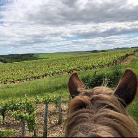 Main image ofHorse riding through vines