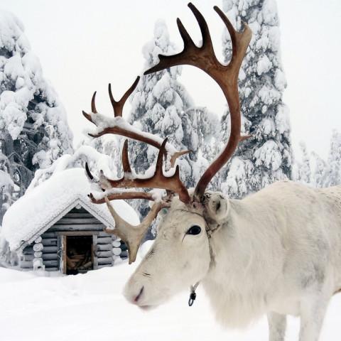 Main image ofSéjour hiver tout compris en Laponie