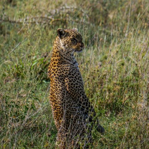 Main image ofDécouverte de la Tanzanie avec un magnifique Safari