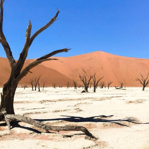 Main image ofRoad Trip en Namibie