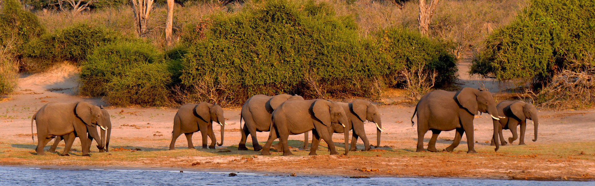 Main image ofSafaris Infinis: Chobe, Moremi, Okavango