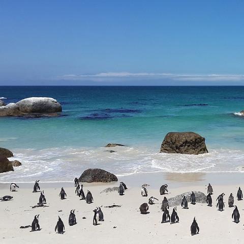 Main image ofMerveilles du Cap au Kruger