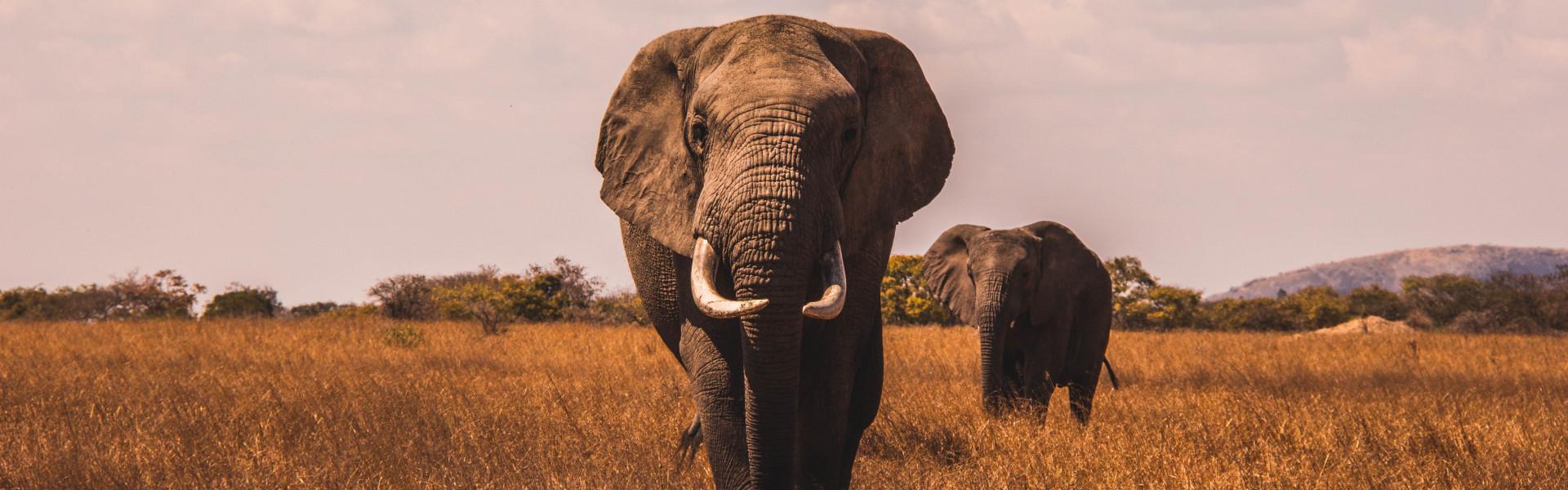 Main image ofLa Tanzanie selon vos envies