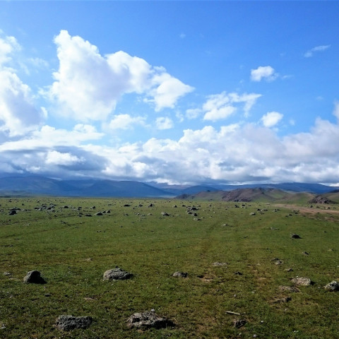 Main image ofLes Steppes Mongoles