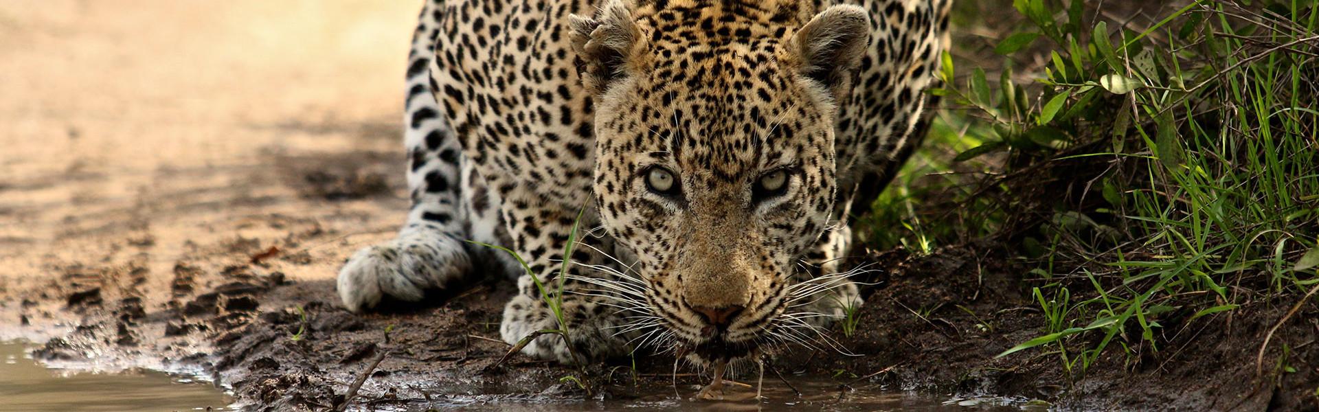 Main image ofSafari en Famille au Kruger