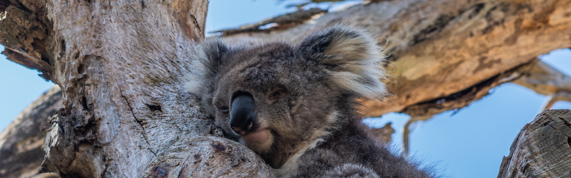 Main image ofL'australie, un rêve lointain