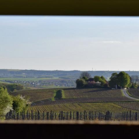 Main image ofDégustation de champagne, repas typiques, visite de Reims et balade à vélo dans les vignobles !