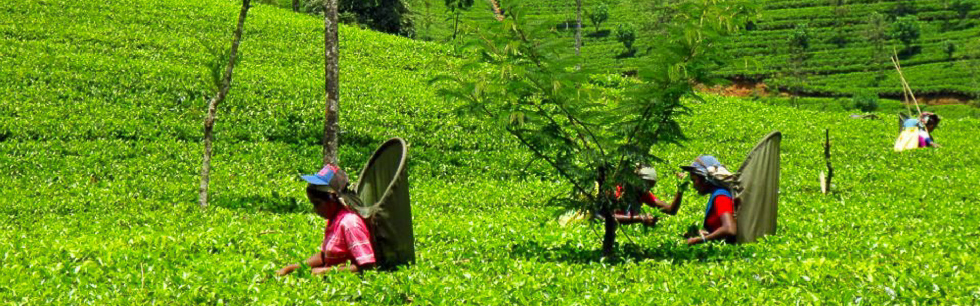 Main image ofVoyage Culturel et Humain au Sri Lanka  (11 jours)