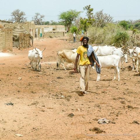 Main image ofRoad-Trip en famille au Sénégal (14 jours)