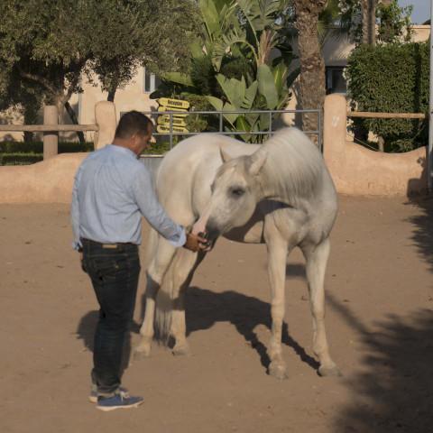 Main image ofSéjour dans le désert et coaching avec le cheval