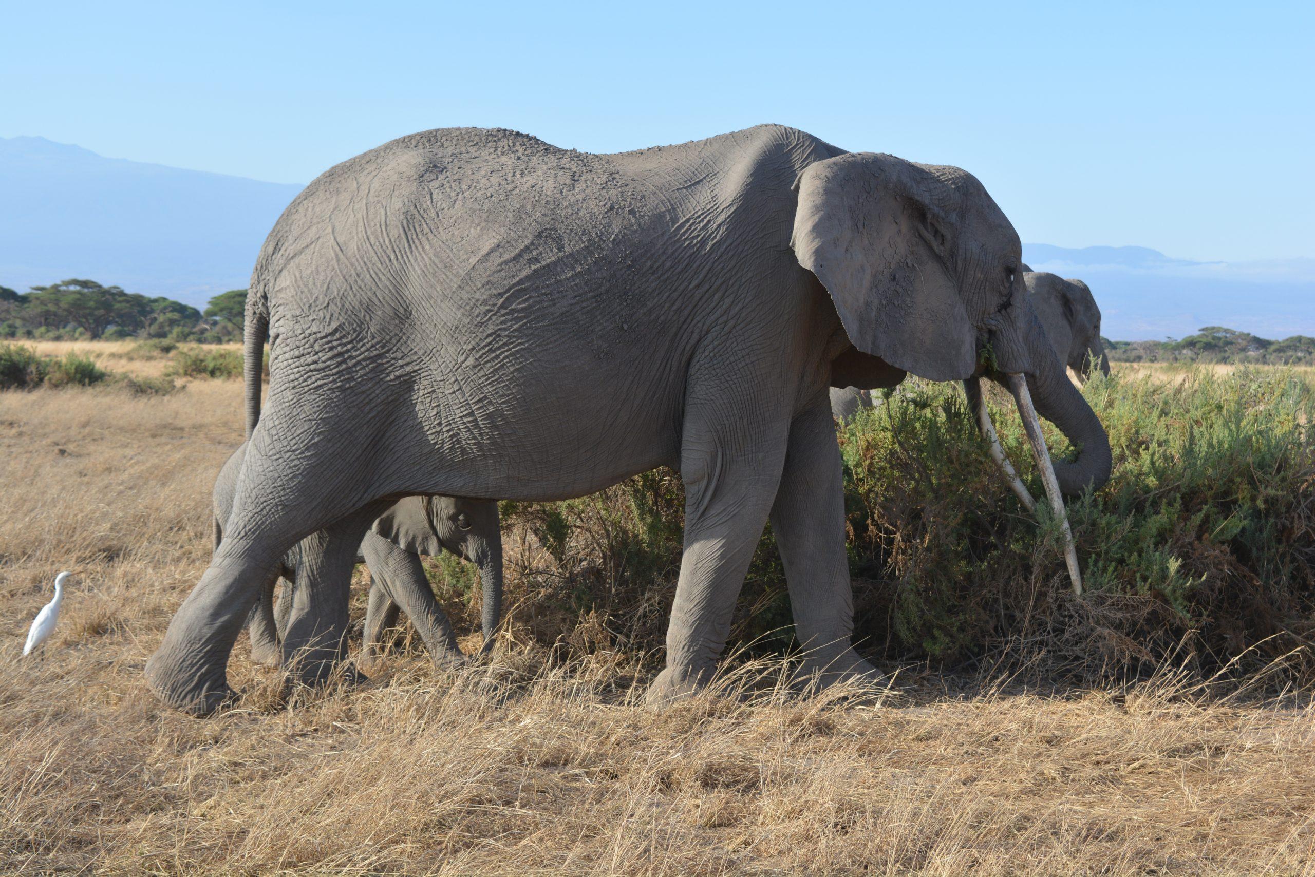 Main image ofLa Magie d'Amboseli