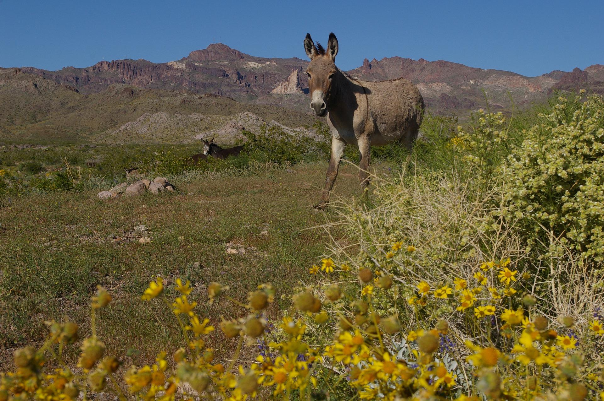 Main image ofLe Pays de Dieulefit avec des ânes