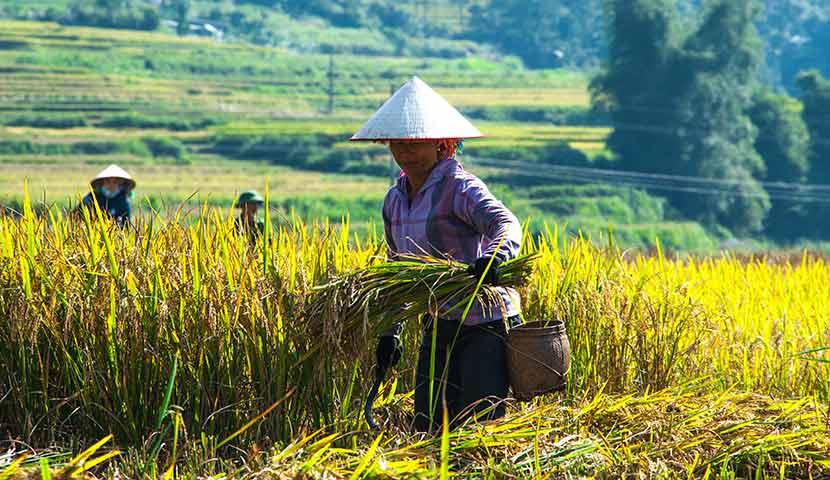 Main image ofTout le Nord du Vietnam