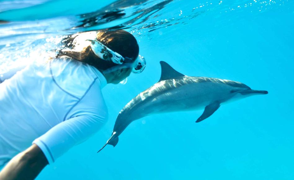 Main image ofLa perle des Bahamas et ses dauphins sauvages - Nage Ecoresponsable avec les dauphins