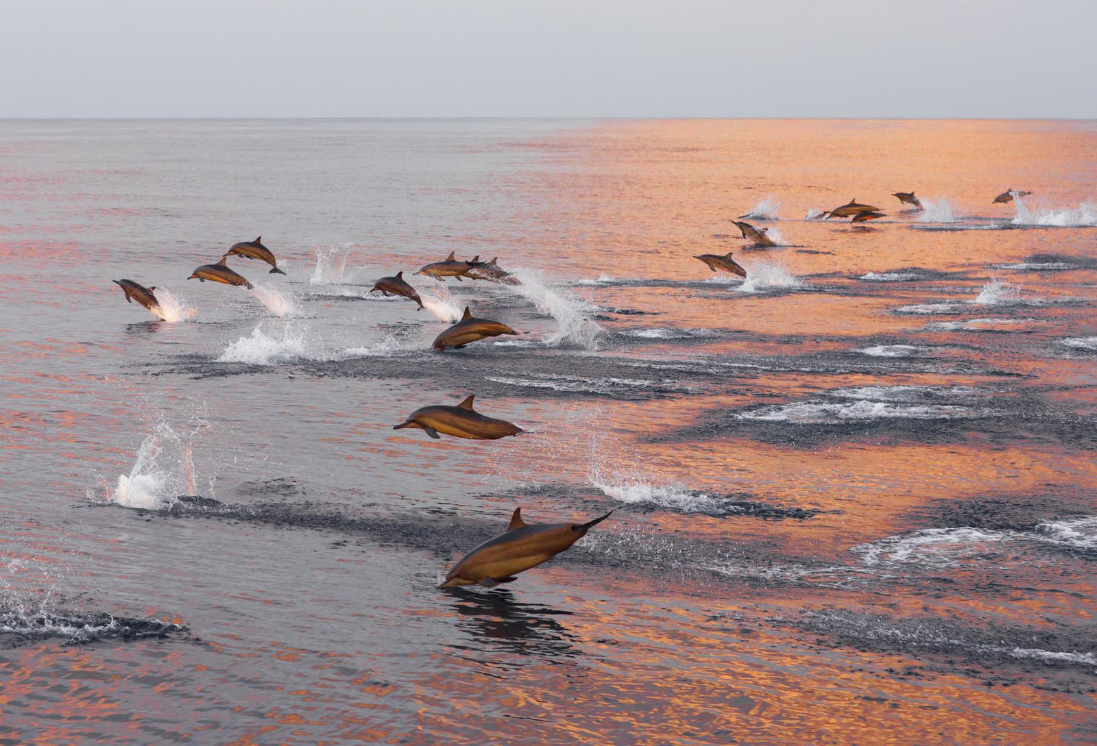 Main image ofEscapade BIen-être & Dauphins sauvages en Bretagne