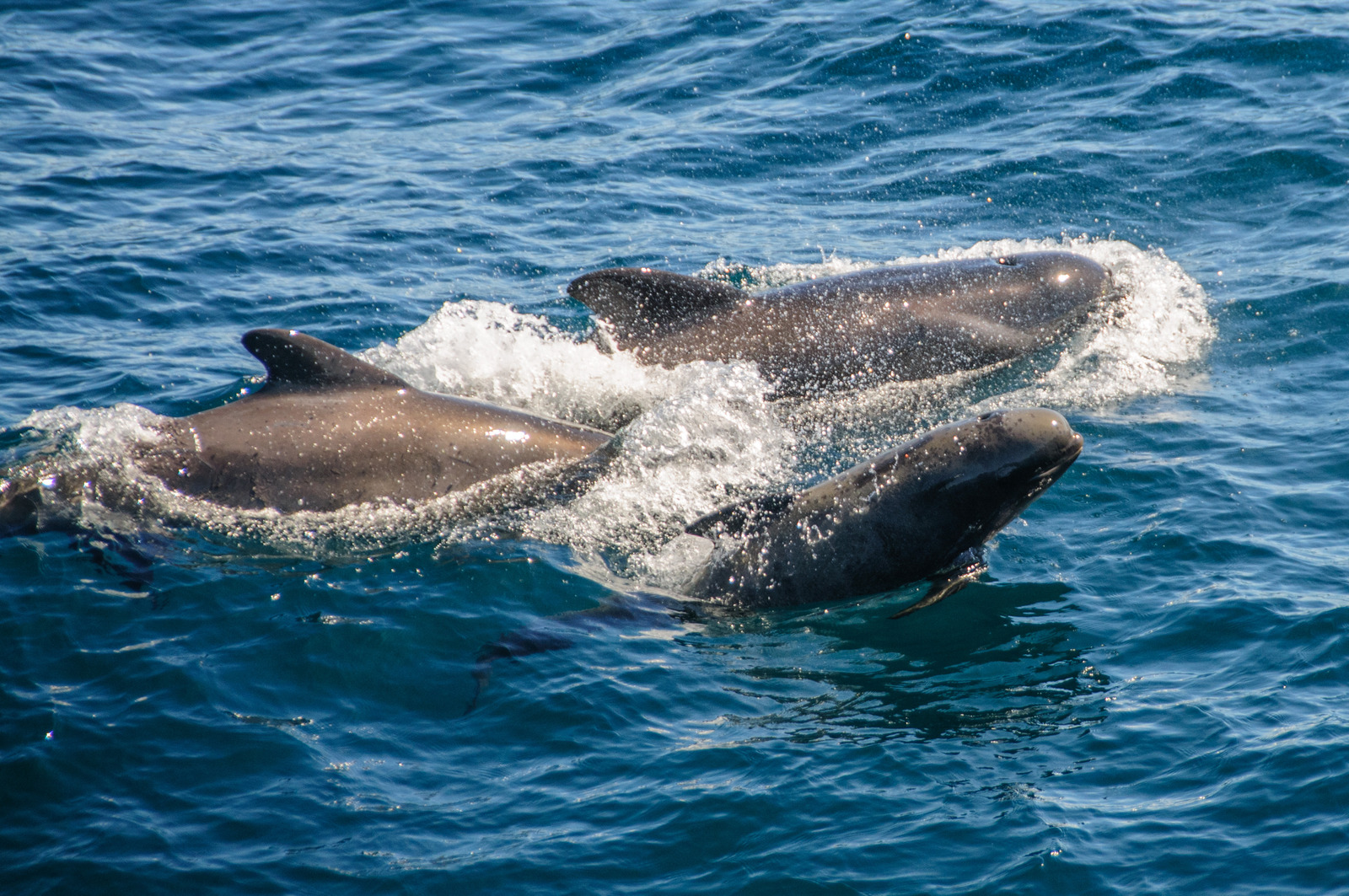 Main image ofEscapade Famille - Bretagne Insolite & Dauphins Sauvages