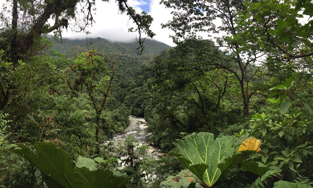 Main image ofVoyagez Écoresponsable au Costa Rica !