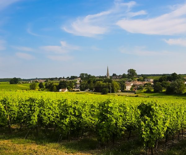 Main image ofEntre pourpre et doré, découvrez les grands crus classés du vignoble Bordelais