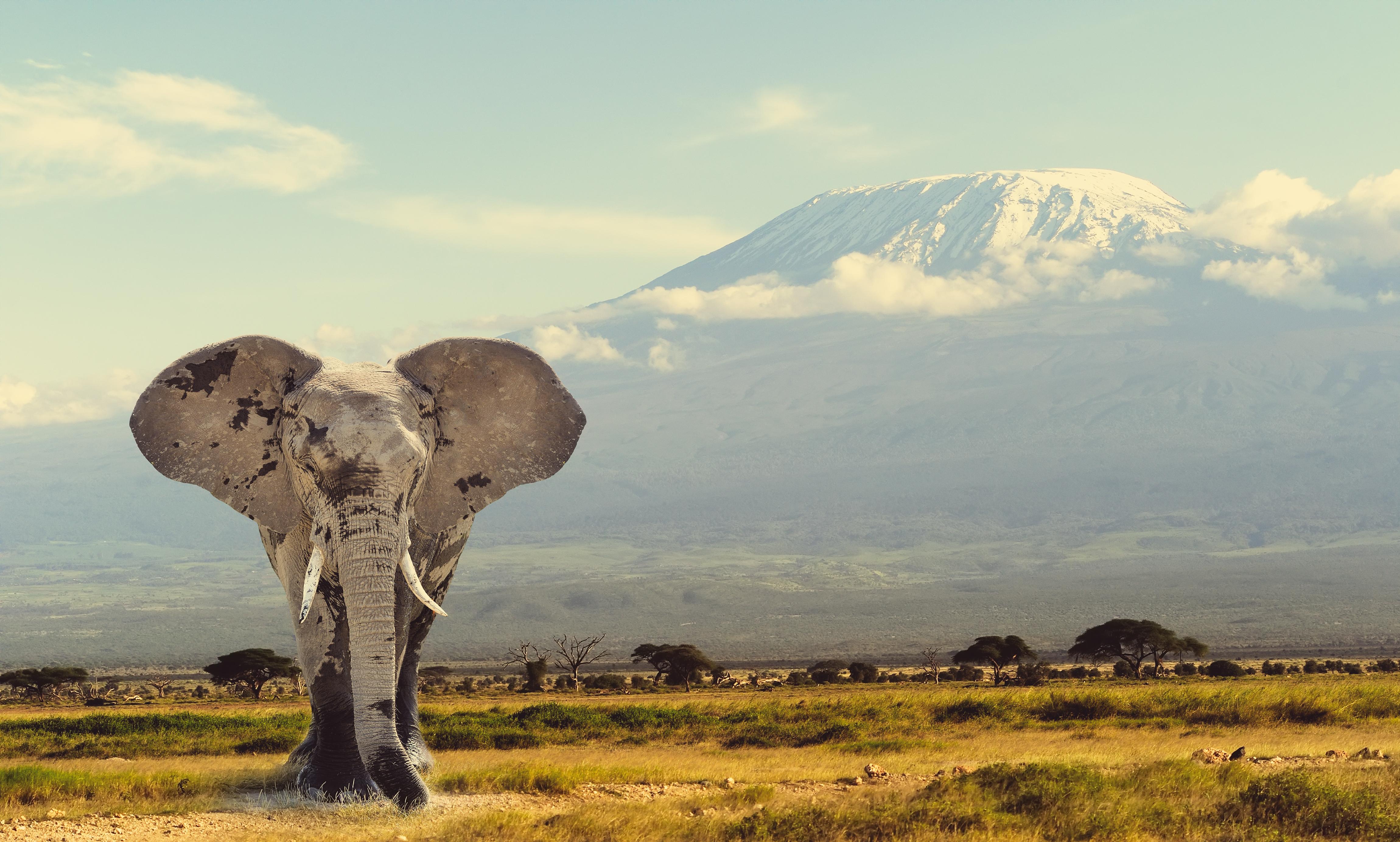 Destination image of United Republic Of Tanzania