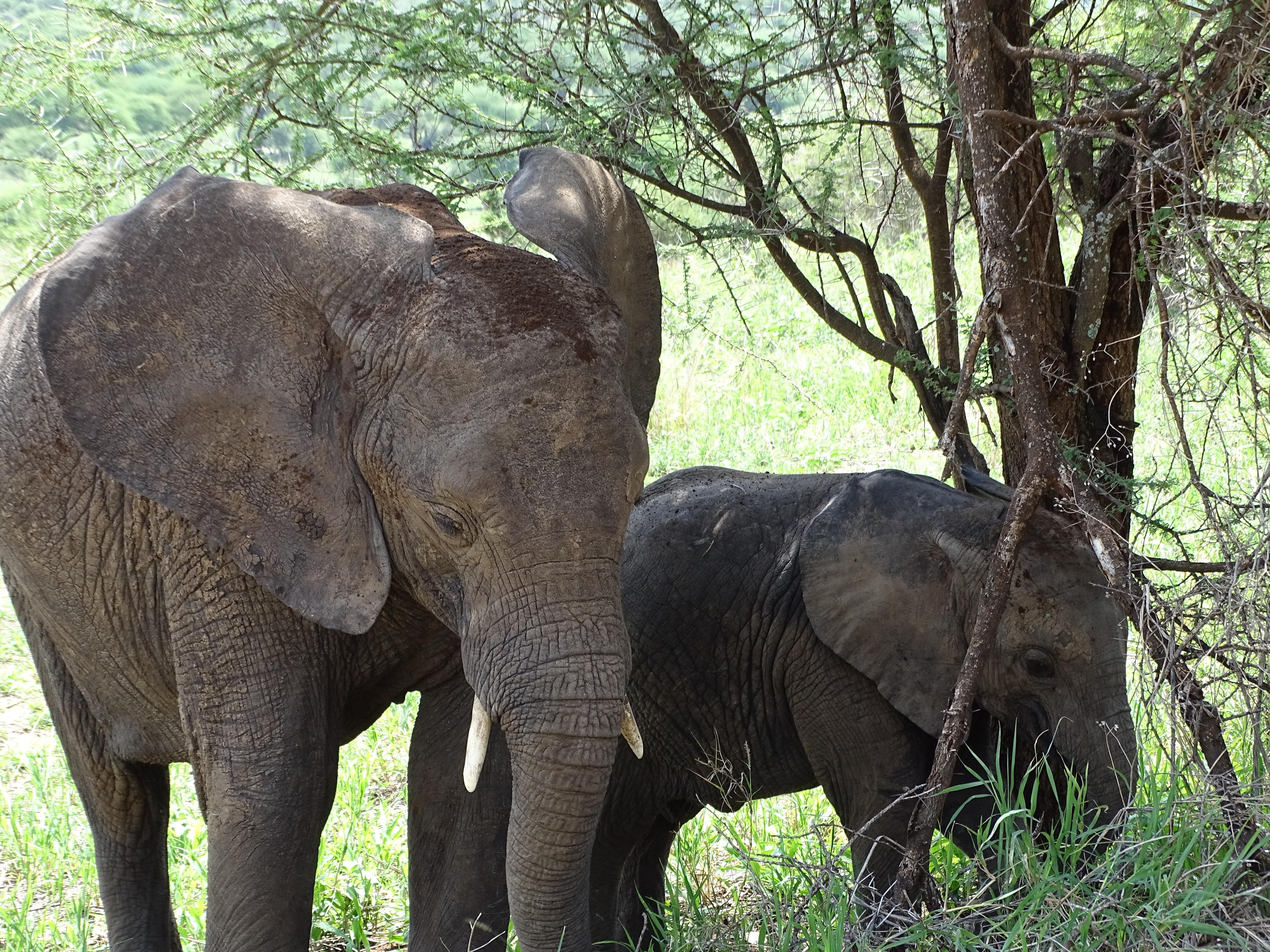 Main image ofTanzanie & Zanzibar en Famille