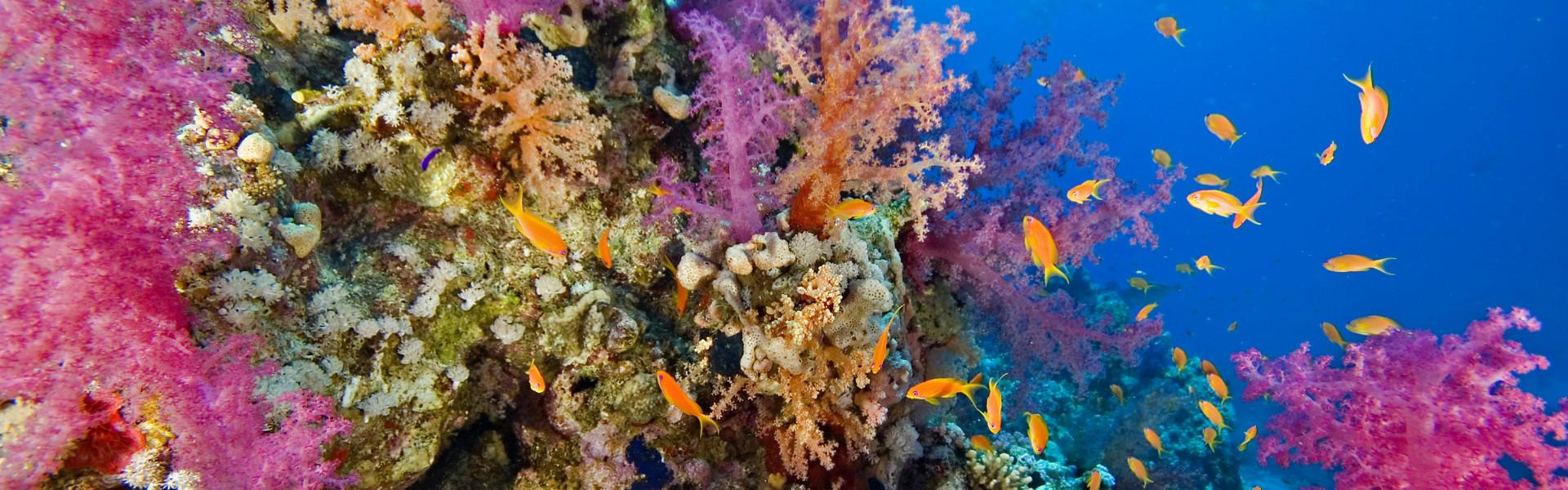 Destination image of Océan indien