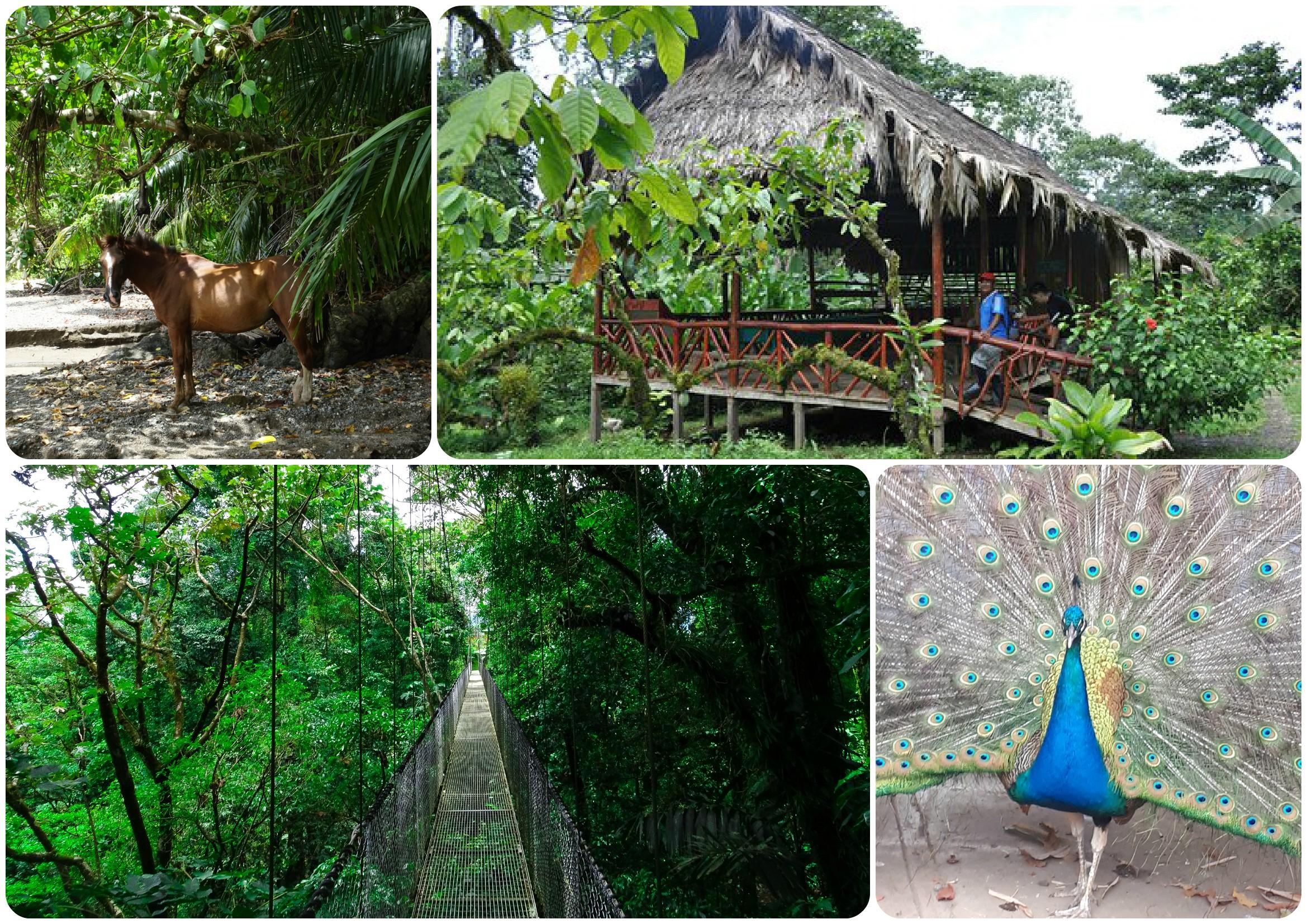 Main image ofIncontournable nature, farniente à la plage du Pacifique et Tortuguero