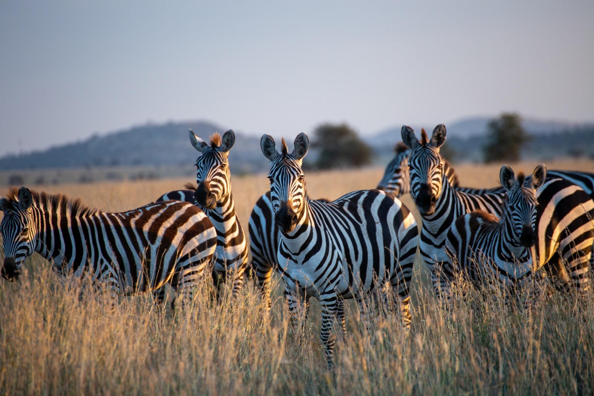 Destination image of Safari